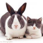 Farklı Hayvanlar Aynı Renkleri Paylaşınca