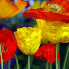 En Güzel Çiçek Sepetleri