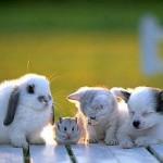 Sevgiyi ve Saygıyı Hayvanlarıdan Öğrenebileceğimizi Gösteren 21 Mükemmel Fotoğraf