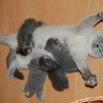 Anne Olmanın Nasıl Bir His Olduğunu Yüz İfadesi ile Anlatan Kedi