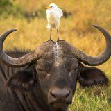 Vahşi Yaşam Komedi Fotoğraf Yarışması Kazananlarından 16 Eğlenceli Fotoğraf