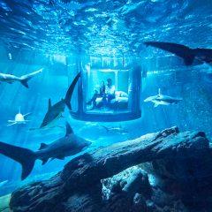 İçinde 35 Köpek Balığı Olan Akvaryumda Bir Gece Konaklama