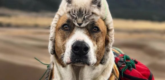 Dünyayı Beraber Keşfetmeyi Seven Maceraperest Kedi ve Köpek