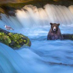 National Geographic Fotoğraf Yarışmasından 20 Muhteşem Fotoğraf