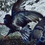 2016 Sony Dünya Fotoğraf Yarışması Kazananlarından Muhteşem Kareler