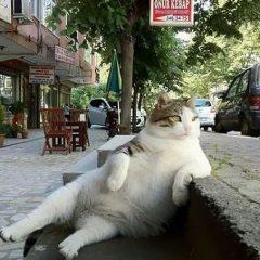 İstanbul'un En Popüler Kedisi Kendi Heykeli ile Onore Edildi